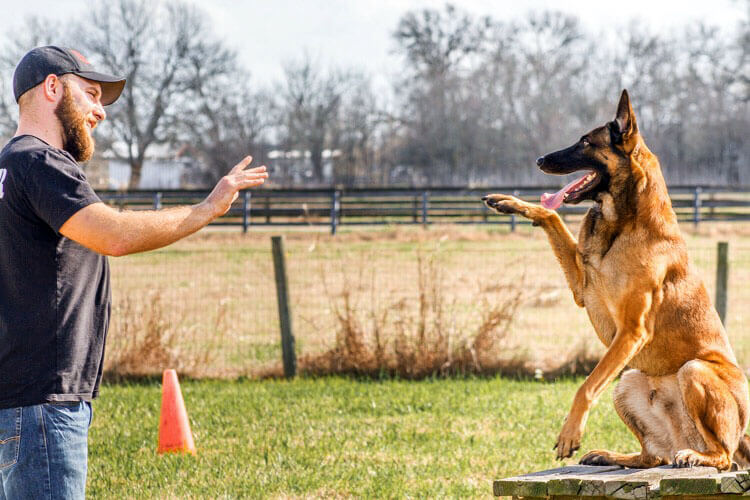 Dog Training Tips for Those Who Want To Try Dog Training At Home: Know the Things to Teach Your Dog